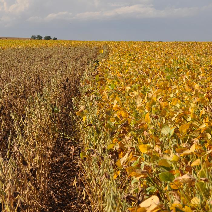 Fungicidas: Modo de Ação e Programas de Controle
