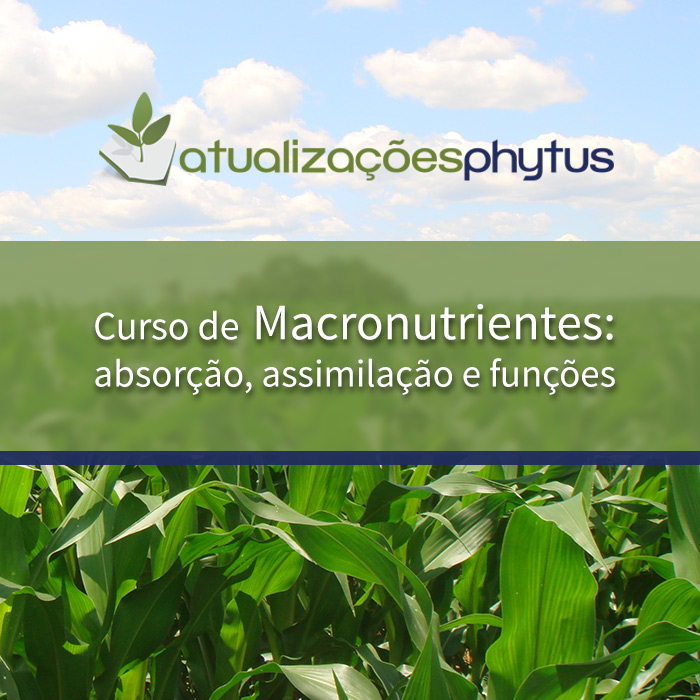 Macronutrientes: absorção, assimilação e funções