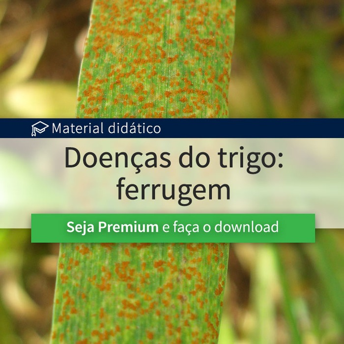 Doenças do trigo:Ferrugem