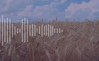 Alerta para o estabelecimento inicial do trigo