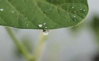 Direções alternativas dos agrotóxicos na folha