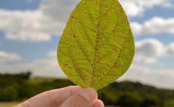 Como escolher os fungicidas com a melhor performance para sua lavoura