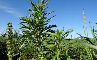 Como o Koc, o Pka e o Kow influenciam na dinâmica de herbicidas no solo?