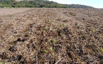 Controle químico de plantas daninhas em pré-emergência na cultura do trigo (<em>Triticum aestivum</em>)