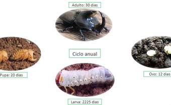 Corós, pulgões, percevejos e lagartas -Controle em Trigo