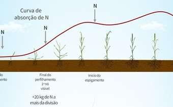 Cultivares de trigo e o manejo de N
