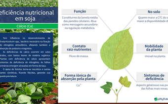 Deficiência nutricional em soja: Ca