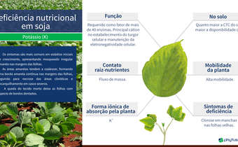 Deficiência nutricional em soja: K