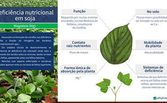 Deficiência nutricional em soja: Mg