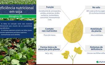 Deficiência nutricional em soja: N