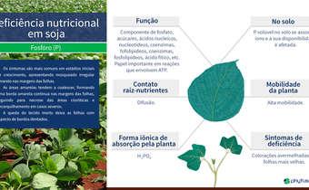 Deficiência nutricional em soja: P