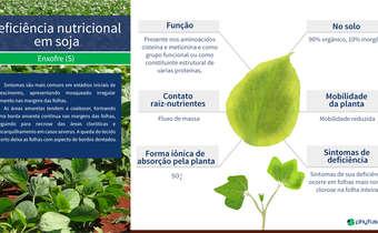 Deficiência nutricional em soja: S