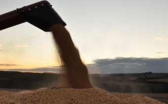 Determinação de perdas de colheita em culturas de grãos