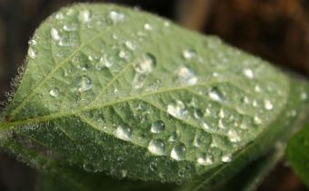 Diferença entre fungicidas sítio-específico e multissítio
