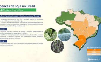 Doenças da soja no Brasil: Oídio