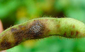 Palestra: Doenças na soja: os riscos de 2019