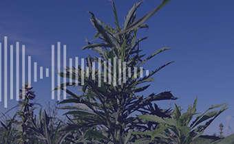Dúvidas sobre o controle de plantas daninhas?