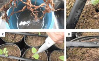 Efeito de sistemas de aplicação e diferentes tratamentos químicos no controle de Pratylenchus brachyurus e ...