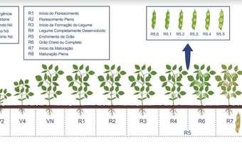 Escala fenológica da soja