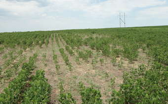 Fitonematoides em áreas de cultivo de soja no Rio Grande do Sul