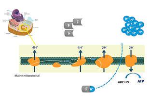 Fluazinam: um fungicida com mecanismo de ação particular