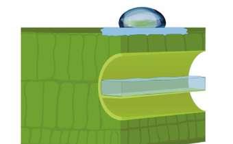 Fungicidas protetores: orgânicos x inorgânicos