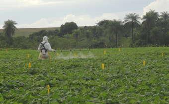 Fungicidas sistêmicos: benzimidazóis, triazóis e estrobilurinas