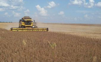 Gestão de riscos no agronegócio