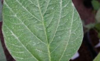 [Gravação do Webinar] Posicionamento de fungicidas protetores