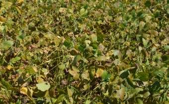 [Gravação do Webinar]Resistência a fungicidas:o que fazer?