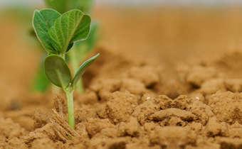 Importância da formação do perfil do solo para altas produtividades