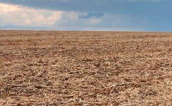 Importância da palhada de soja na nutrição do milho