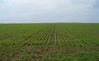 Inóculo inicial e a primeira aplicação de fungicida em soja