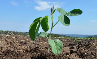 Introdução à nutrição mineral de plantas