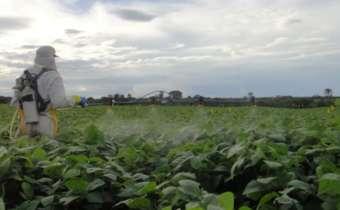 Já definiu o intervalo entre as aplicações de fungicidas?