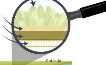 Lipofilicidade do fungicida e a penetração na folha