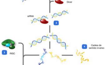 Mecanismo de funcionamento do RNAi
