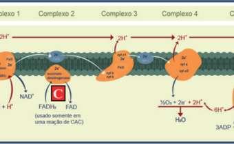 Mecanismo e modo de ação do grupo químico das carboxamidas