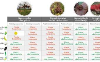 Nematoides: batalha interminável
