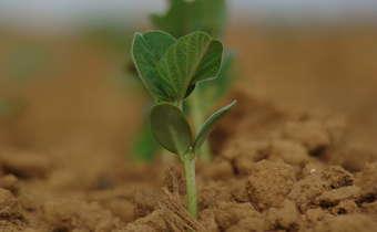 Nutrição via solo e folha: erros e acertos