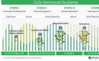 O ciclo hormonal das plantas