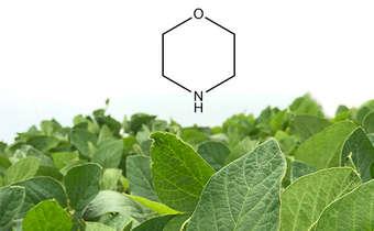 Perguntas e respostas sobre o uso de morfolinana soja