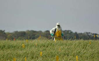Posicionamento de fungicidas em trigo
