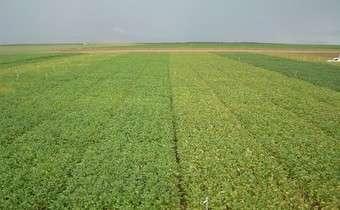Programa de aplicações em cultivares de soja