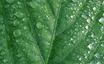 Propriedades físico-químicas dos fungicidas e penetraçãoem tecidos