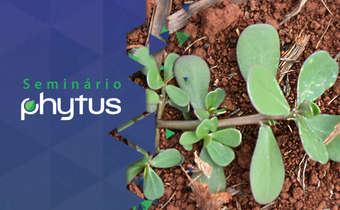 Quais são os sinais da presença de plantas resistentes em uma área?