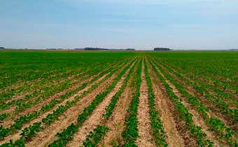 Sistema sulco/camalhão beneficia o cultivo de soja no RS