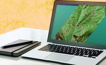 [Slides do Webinar Especial 3] Manejo da Soja: doenças, pragas e plantas daninhas. Desafio para ...
