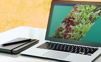 [Slides do Webinar Especial 1] Manejo da Soja: doenças, pragas e plantas daninhas. Desafio para ...