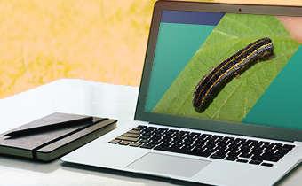 [Slides do Webinar] Inseticidas: planejamento e posicionamento para a próxima safra de soja